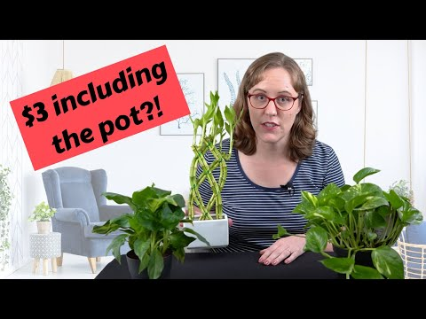 Where to Buy Cheap Indoor Plants: My Top 5 Favorite Places!