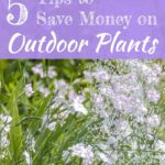 5 tips to save money on outdoor plants