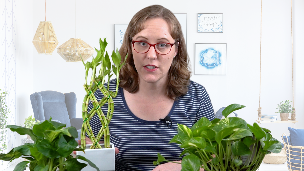 Woman with house plants